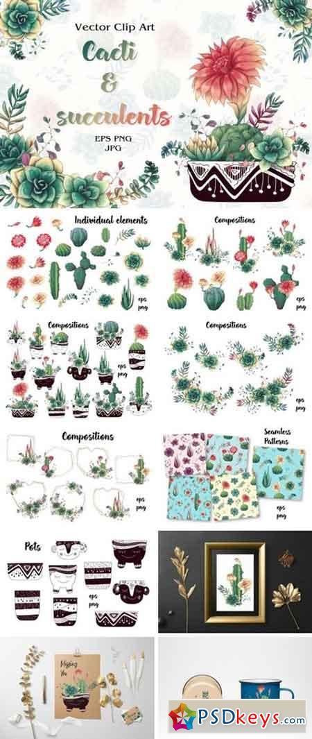 Cacti & Succulents 3515603