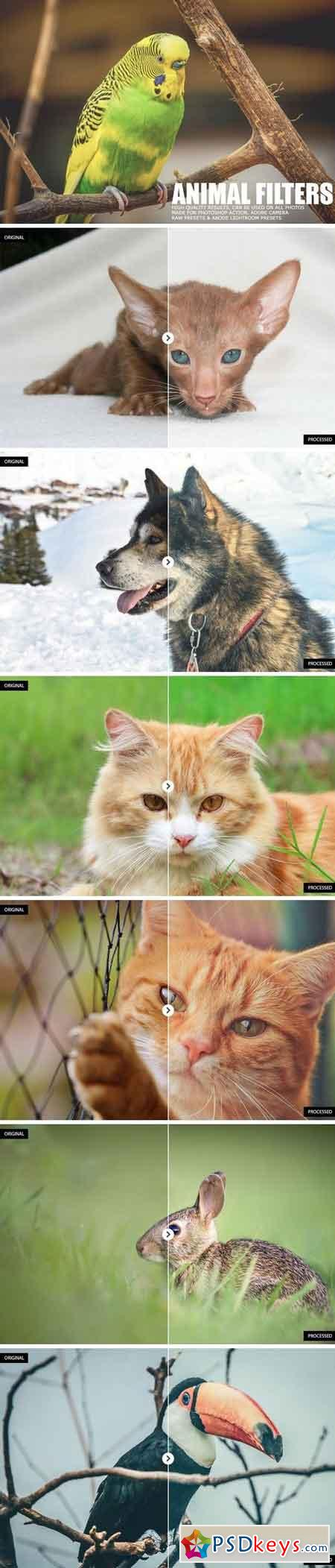 17 Animal Lightroom Presets 1167174