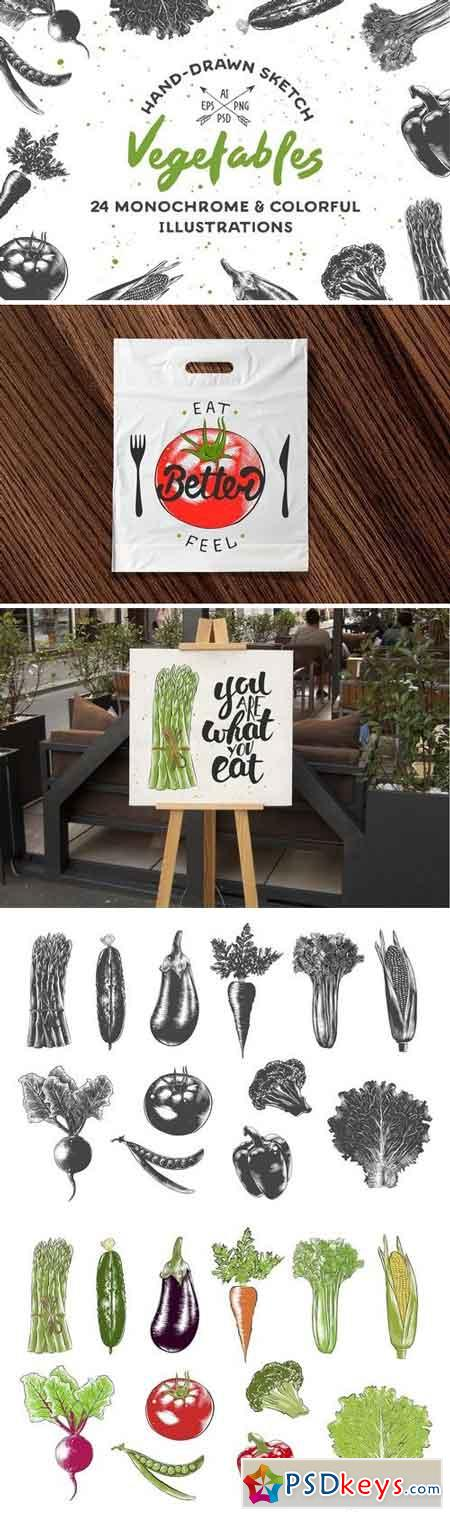 Collection of hand-drawn vegetables 2342132