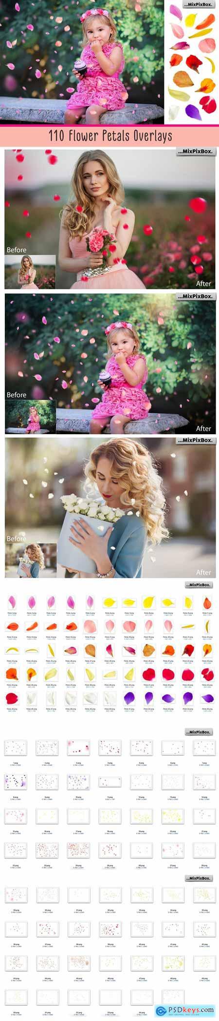 Flower Petals Photo Overlays 3399998