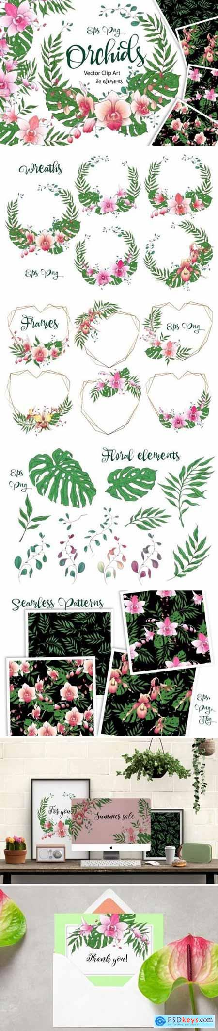 Orchids - Graphics