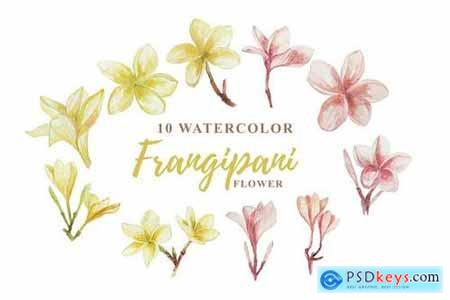 10 Watercolor Frangipani Illustration Graphics