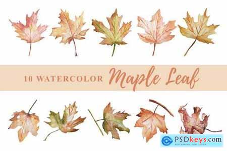 10 Watercolor Maple Leaf Illustration Graphics