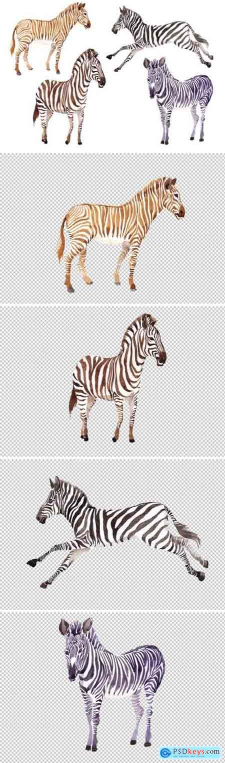 Creativemarket Zebra set Watercolor png