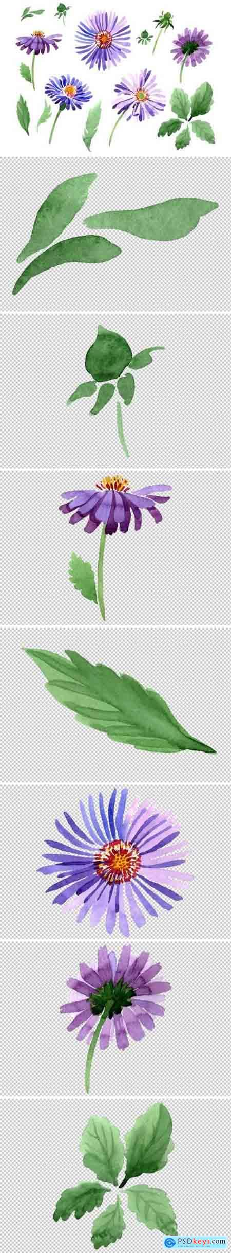 Creativemarket Asters Watercolor png