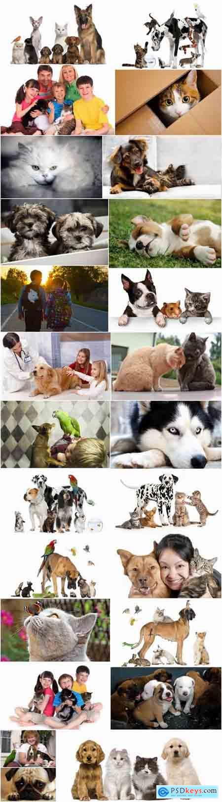 Pets pet dog cat animal bird 25 HQ Jpeg