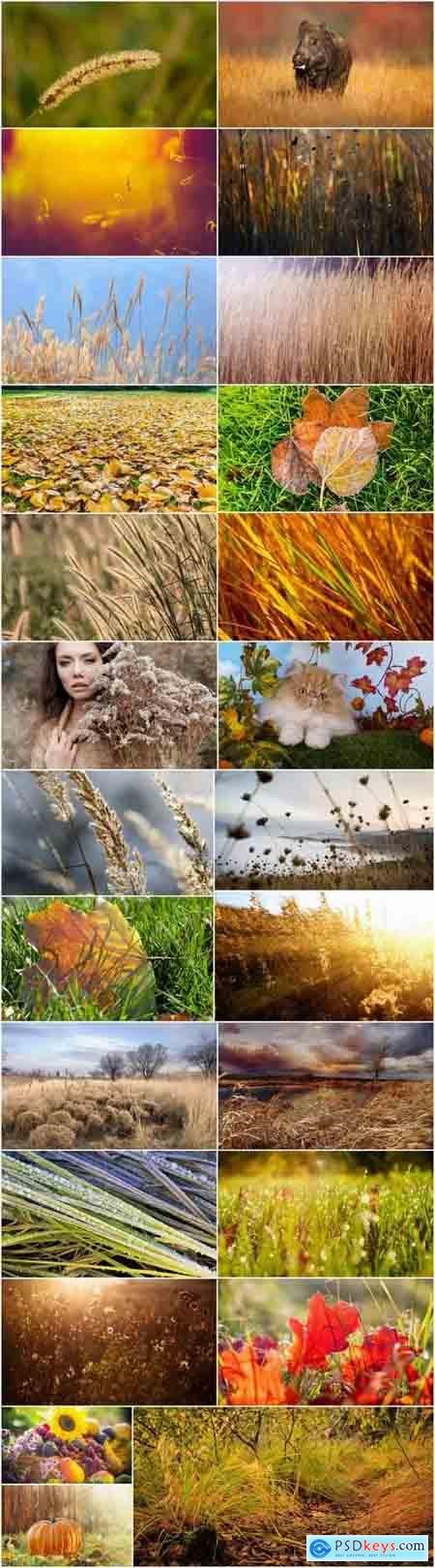 Autumn grass field landscape ear of yellow leaf 25 HQ Jpeg