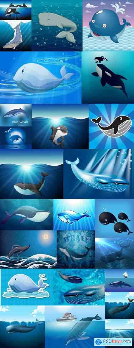 Orca whale illustration for children's books of the underwater world 25 EPS