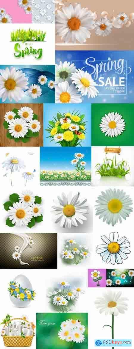 Daisy flower petal spring flyer banner frame background 25 EPS
