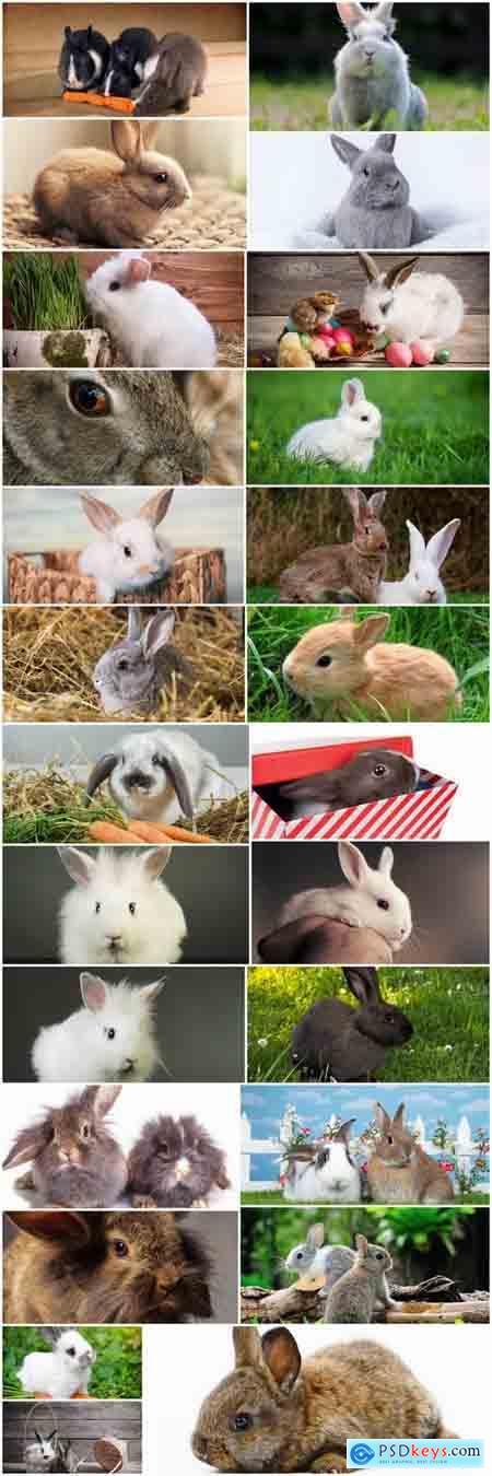Rabbit fur rodent 25 HQ Jpeg