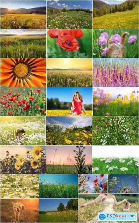 Flower meadow wild flower meadow field sprout landscape 25 HQ Jpeg