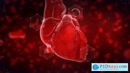 Videohive Heart Reveal Free