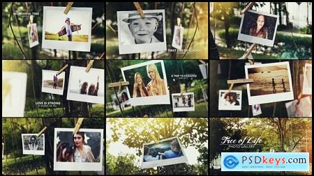 Videohive Tree of Life Photo Gallery Free
