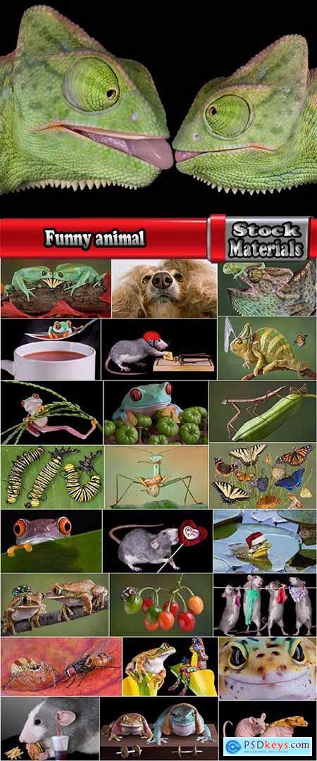Funny animal toad frog insect spider rat chameleon 25 HQ Jpeg