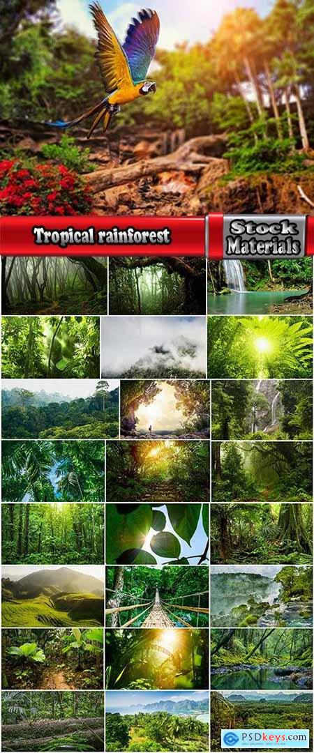 Tropical rainforest foliage green tree crown 25 HQ Jpeg