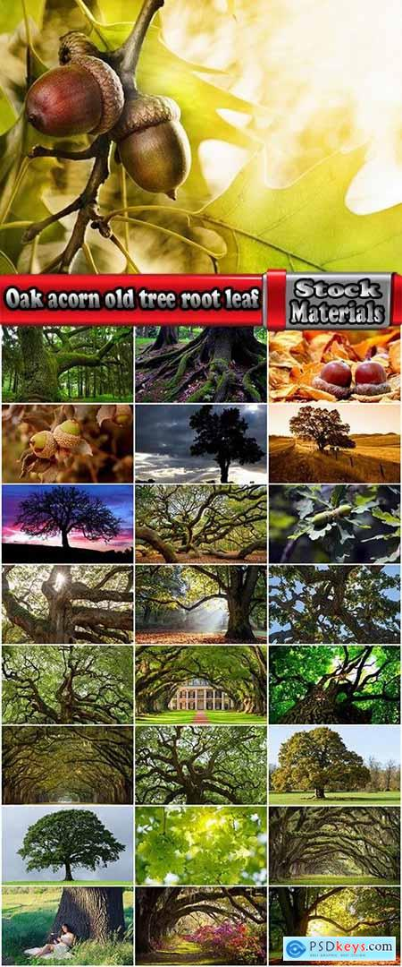 Oak acorn old tree root leaf 25 HQ Jpeg