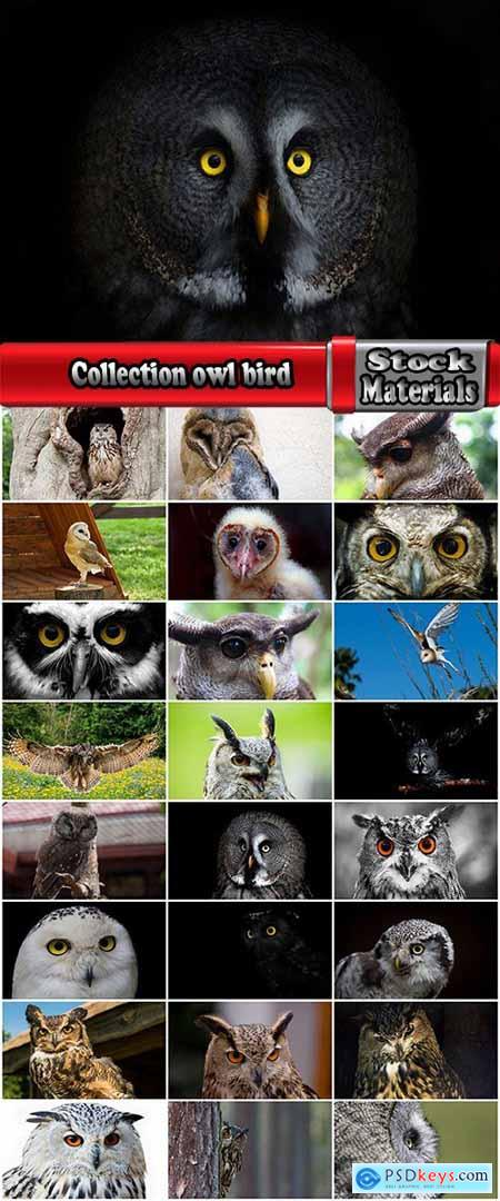 Collection owl bird wing feather hunter predator 25 HQ Jpeg