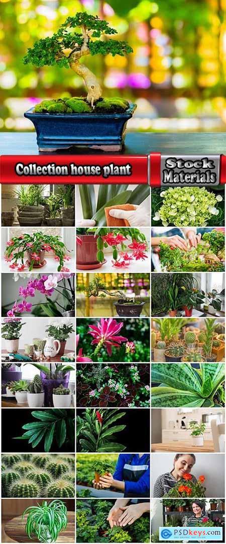 Collection house plant indoor flower leaf pot 25 HQ Jpeg