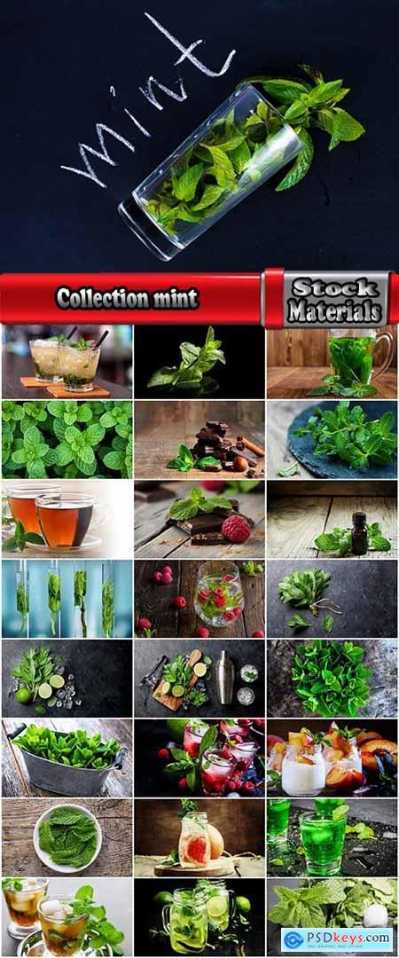 Collection mint leaf leaf plant mint drink freshness 25 HQ Jpeg