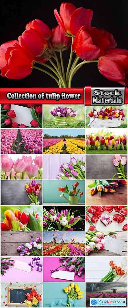 Collection of tulip flower decoration feast flower field 25 HQ Jpeg
