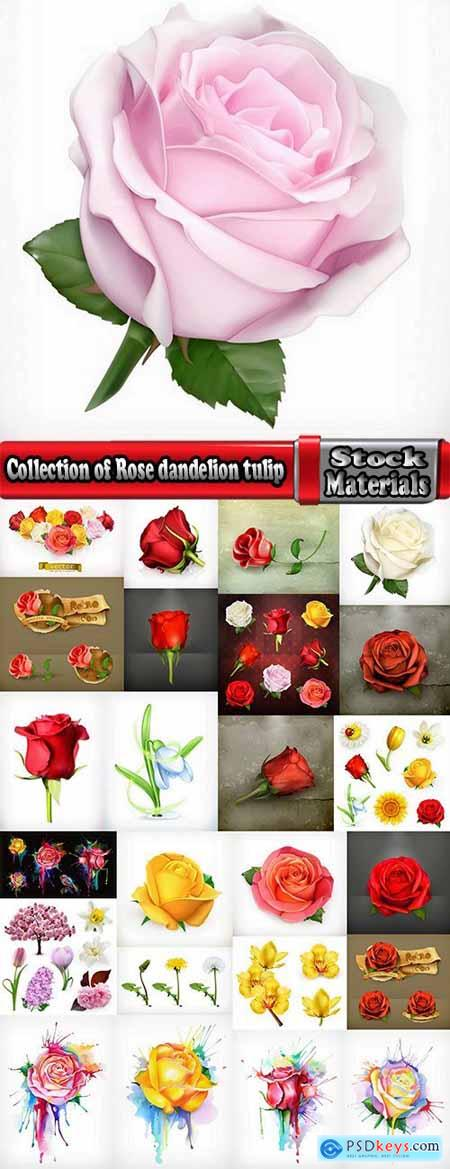 Collection of Rose dandelion tulip flower petal vector image 25 EPS