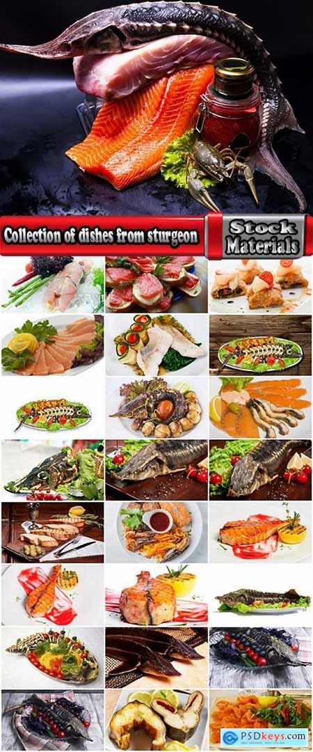 Collection of dishes from sturgeon fish fried delicacy red white meat 25 HQ Jpeg