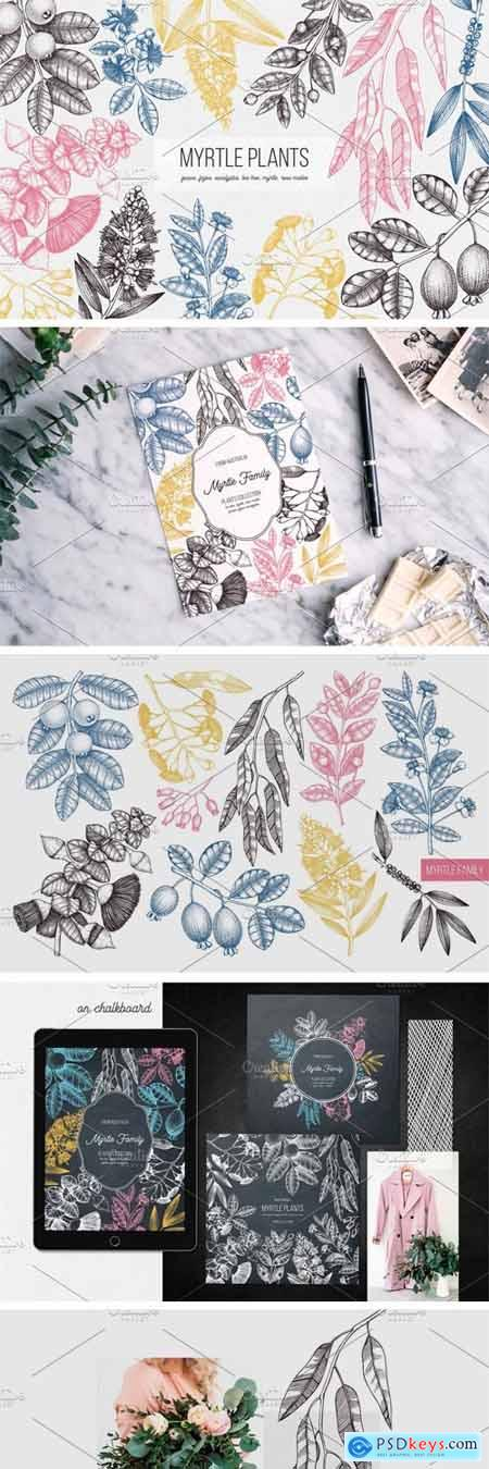 Creativemarket Myrtle Plants Collection 2799313