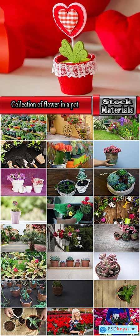 Collection of flower in a pot indoor plant decoration germ sprout a petal 25 HQ Jpeg