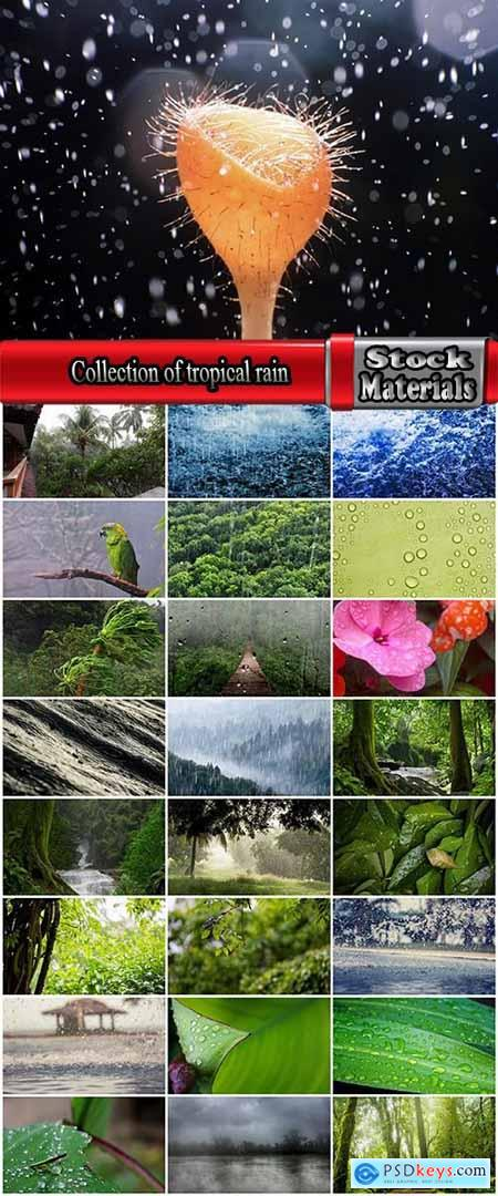 Collection of tropical rain forest water drop leaf close-up image of green spaces 25 HQ Jpeg