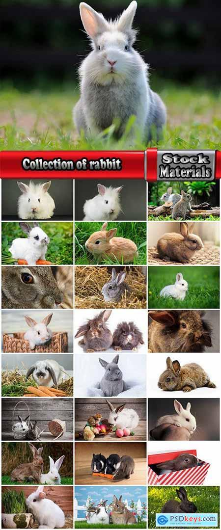 Collection of rabbit fur rodent 25 HQ Jpeg