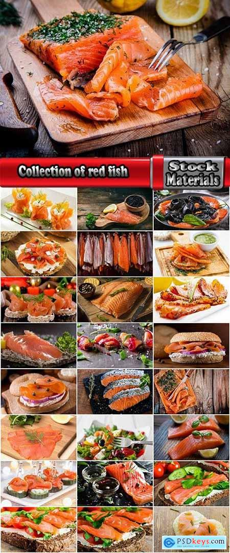 Collection of red fish sandwich meat cutting sushi humpback salmon tuna 25 HQ Jpeg
