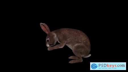Videohive Wild Rabbit Eat