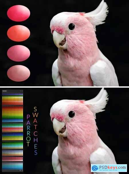 Parrot Swatches