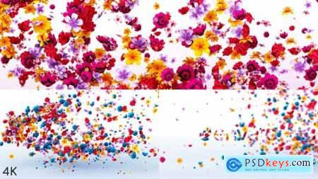 Videohive Flowers Logo Reveal 23972271