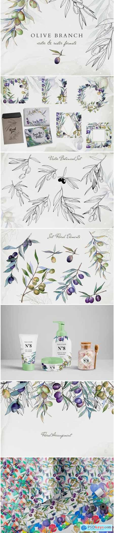 Olive Branches Collection Watercolor