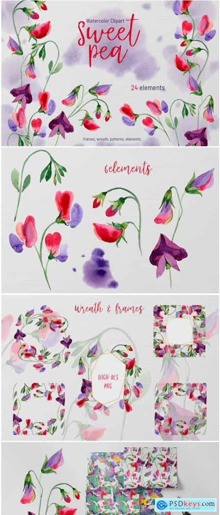 Watercolor Flowers Sweet Pea PNG 1777821