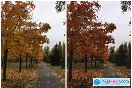 Lightroom Mobile Autumn Preset 4190986