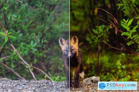 Animal LR Mobile and ACR Presets 4170065