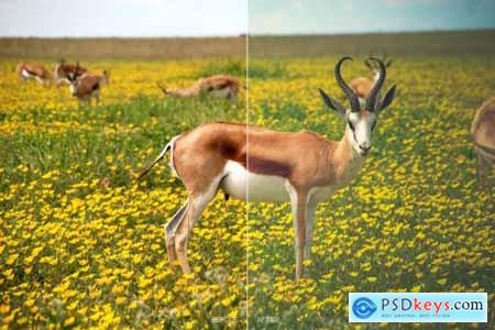 Wildlife Mobile LR and ACR Presets 4171696