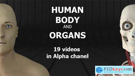 Videohive Human Body and Organs 20727612