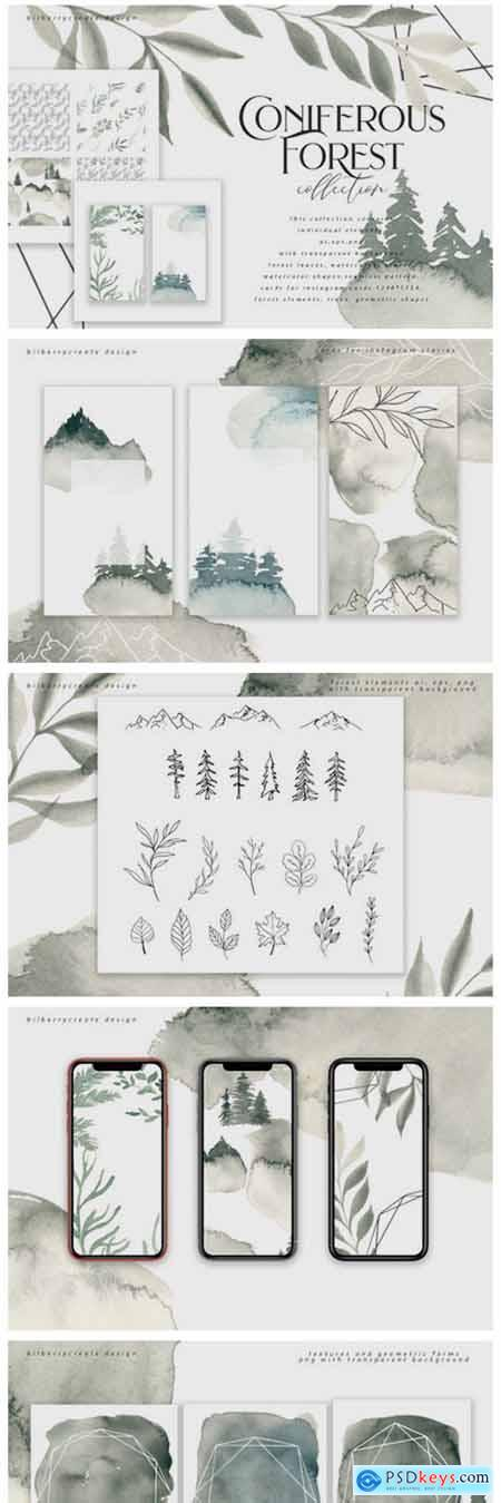 Coniferous Forest Art Collection 2129912