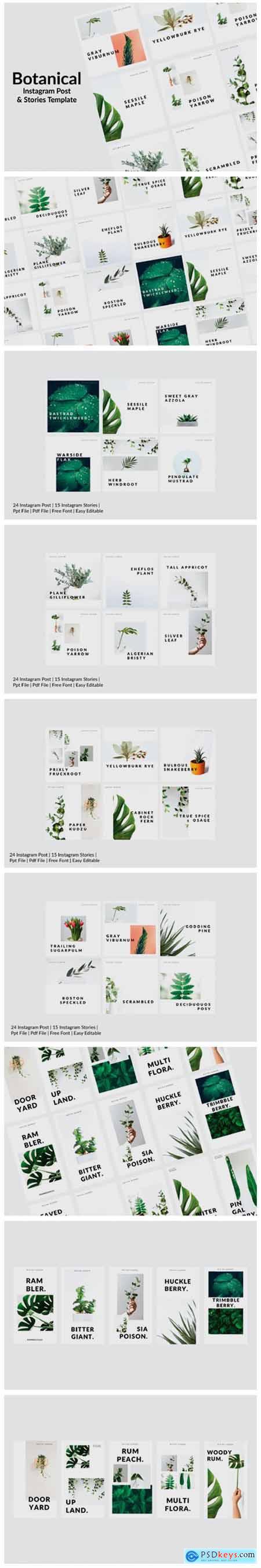 Botanical 2450278