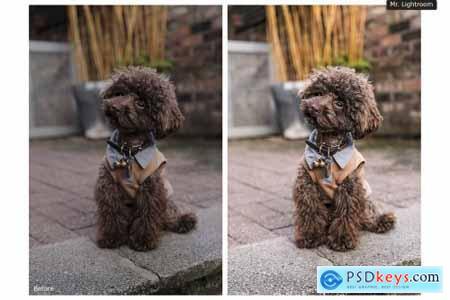 World of Pets Dogs Lightroom Presets 4413945