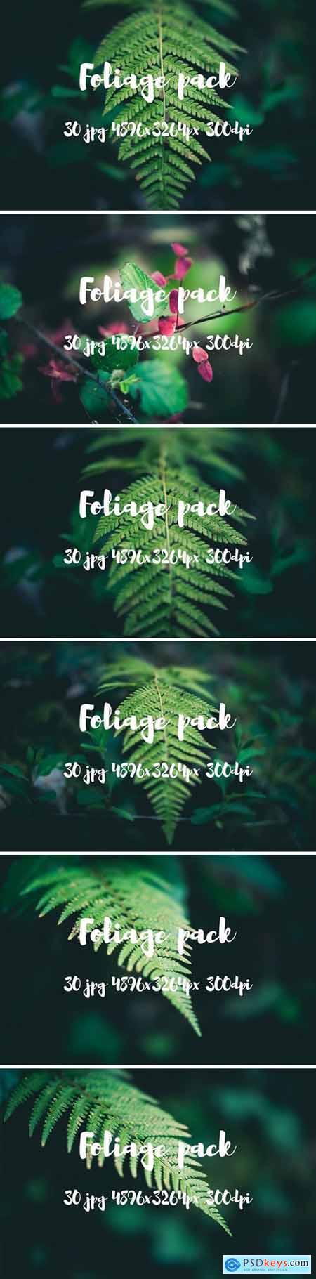 Foliage pack 2477731