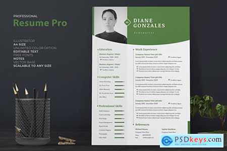 Professional Resume - CV334