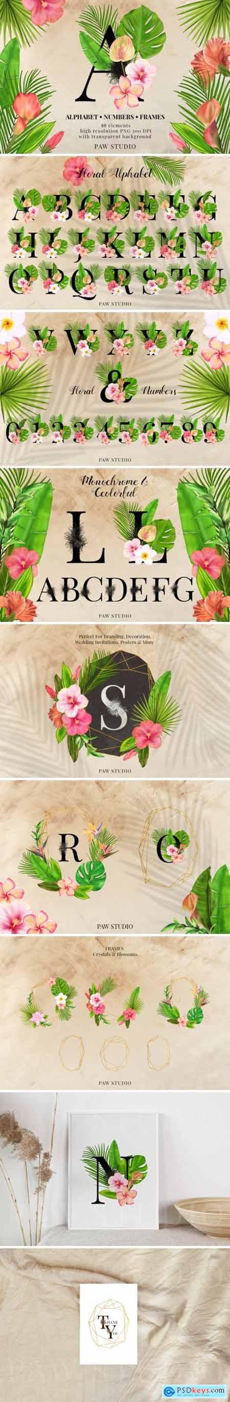 Tropical Graphic Letters