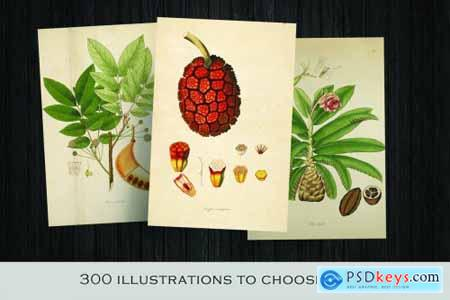 300 Vintage Botanical Illustrations 4247680