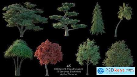 Tree Pack 4K 2 26355178