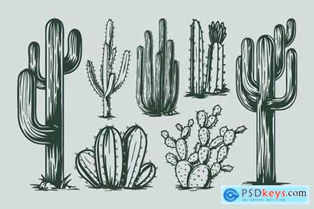 Cactus Hand Drawing