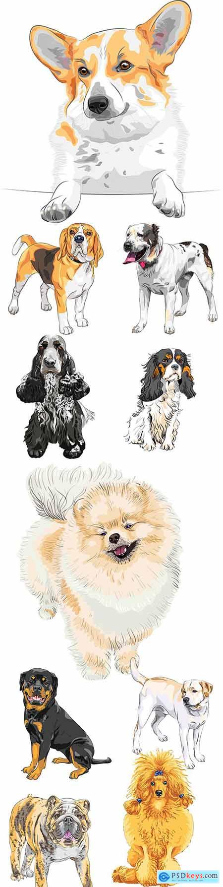 Sketch dog different breed and colour collection illustrations